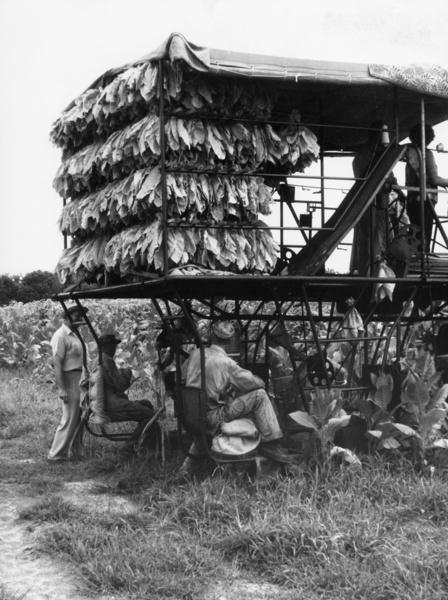 Harvester (Erntemaschine), USA, aus der Serie 'Die Welt des Tabaks', Foto: Ehrhardt, Alfred (1956)