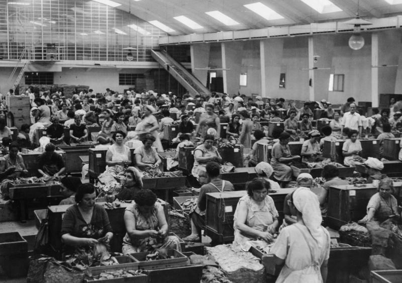 Verlesen der Tabakblätter mit der Hand, Griechenland, aus der Serie 'Die Welt des Tabaks', Foto: Ehrhardt, Alfred (1956)