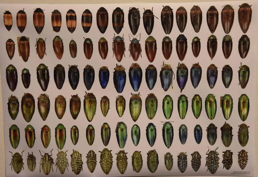 """Die farblich sortierten Käfer des """"Haxorpoda Collective"""" als Plakat, Foto: Wiebke Hauschildt/Deutsche Digitale Bibliothek"""