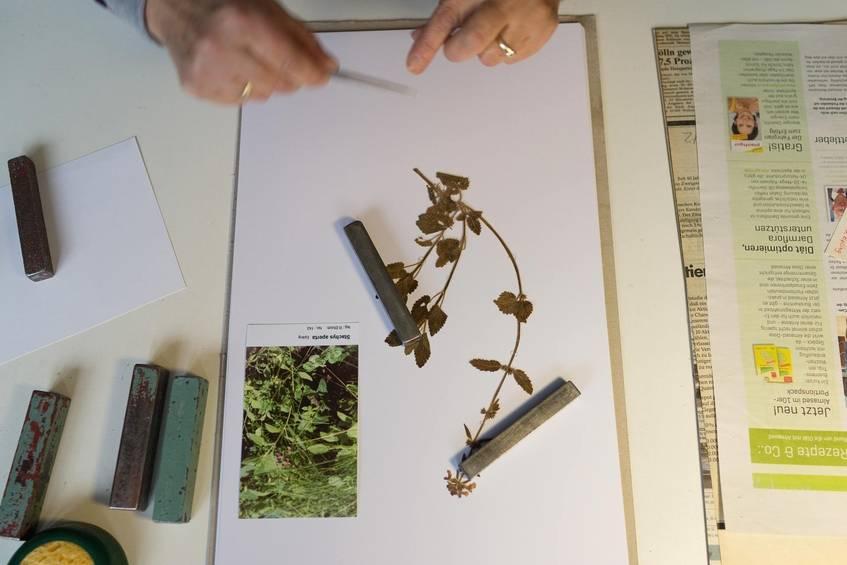 """""""Montage des Herbarbelegs, Botanischer Garten und Botanisches Museum Berlin-Dahlem"""", Fotograf: Jürgen Keiper, Deutsche Digitale Bibliothek"""