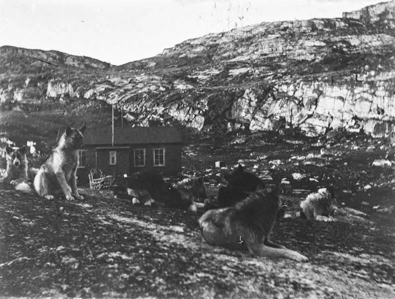 """""""Schlittenhunde (Grönlandexpedition 1891-1893)"""", Nachlass Erich von Drygalski, SLUB/Deutsche Fotothek"""