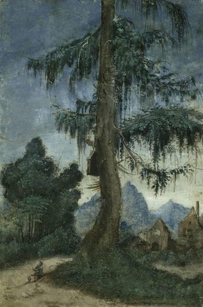 Landschaft mit Fichte, Albrecht Altdorfer, um 1522, aus der Sammlung vom Kupferstichkabinett, Staatliche Museen zu Berlin