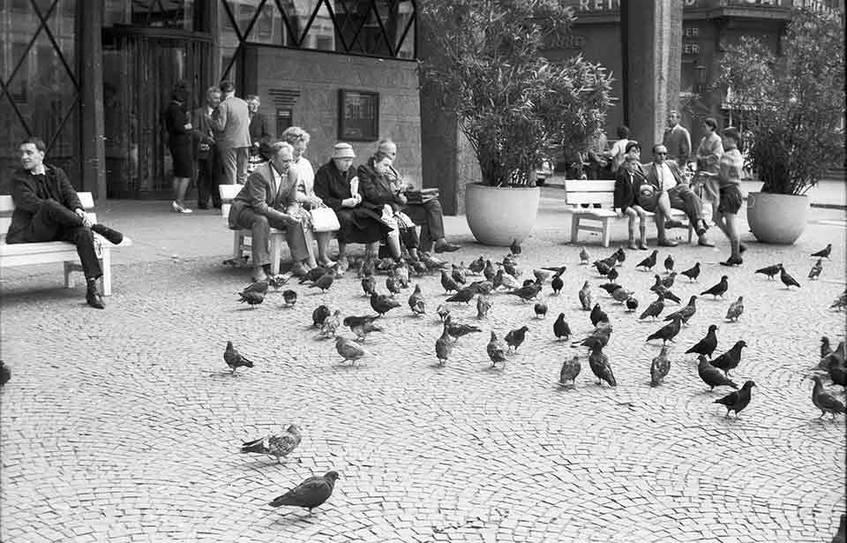 Michael Kerner, Taubenfütterung, Köln, 1962/1963, Aus der Sammlung von Rheinisches Bildarchiv Köln