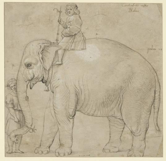"""Raffael wusste, was er tat: """"Der Elefant Hanno"""", Zeichner: Raffael (nach 1516), Kupferstichkabinett, Staatliche Museen zu Berlin (CC BY-NC-SA 3.0 Deutschland)"""