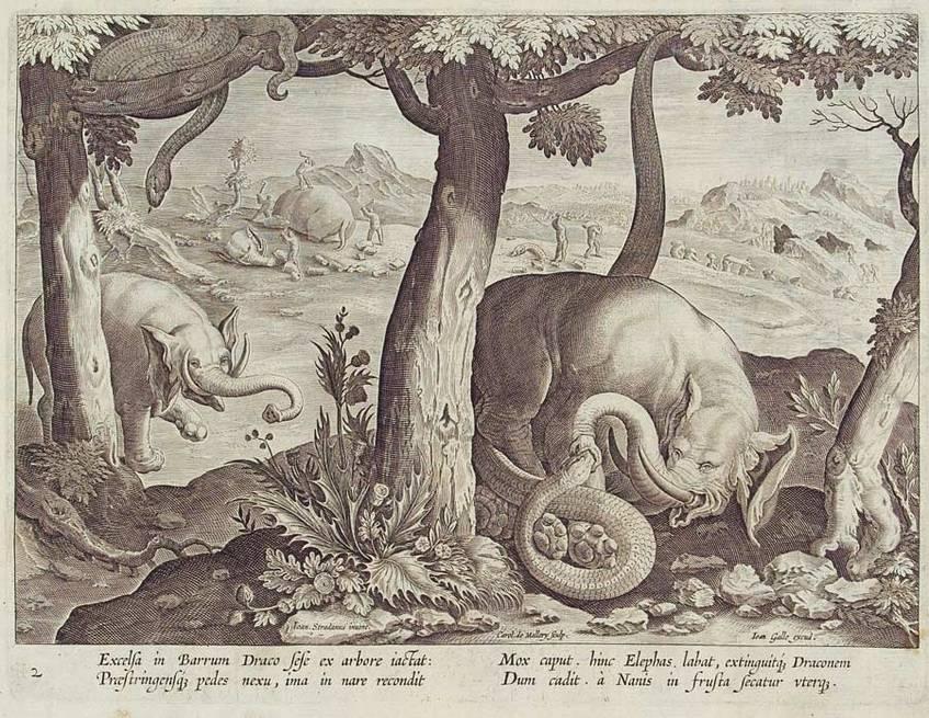 """Beinahe. """"Elefanten im Kampf mit Schlangen und die Zerstückelung eines Elefanten"""", Kupferstich (1626-1650), Karel de Mallery, Herzog August Bibliothek Wolfenbüttel (CC BY-NC-SA 4.0 International)"""