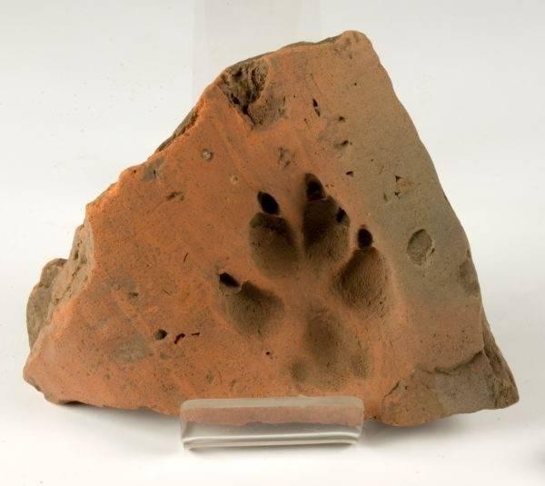 Römischer Ziegel mit Abdruck einer Hundepfote