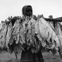 """Neue Sammlungen: """"Die Welt des Tabaks"""" der Alfred Ehrhardt Stiftung"""