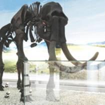 Wir sind die DDB: Das Geomuseum der WWU Münster